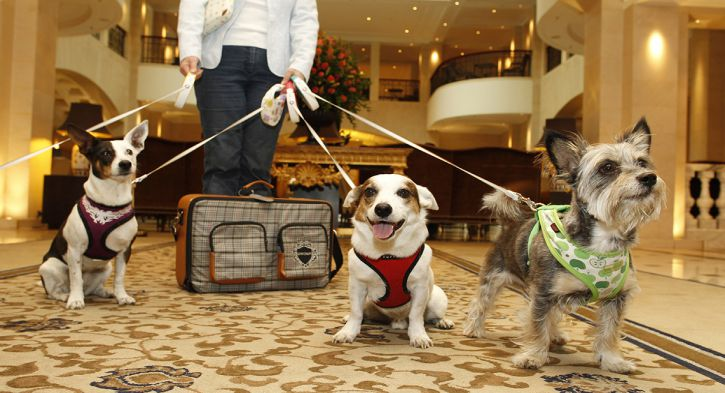 Top 10 Pet Friendly Hotels in Orlando